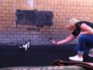 Dance kitty.